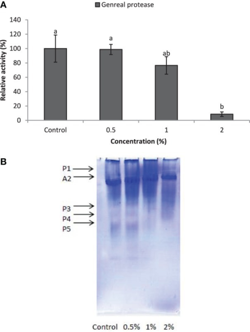 Effect of CCA on general proteolytic activity in the treated larvae of E. ceratoniae. (A) Biochemical assay. (B) Native-PAGE electrophoresis. Different Letters show statistical differences of values (Tukey's test, p ≤ 0.05).