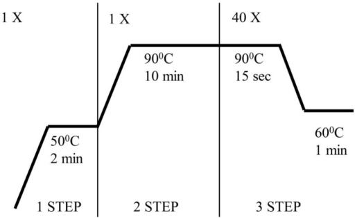 The qRT PCR reaction