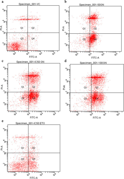 Flow cytometry profile of RT4 cells treated by goniohtalamin (GTN) at 50, 61.3 (IC50), and 100 μM, etoposide IC50for 24 hrs., a) Untreated cells (VC) b) GTN 50 μM; c) IC50GTN d) 100 μM GTN and e) etoposide IC50.