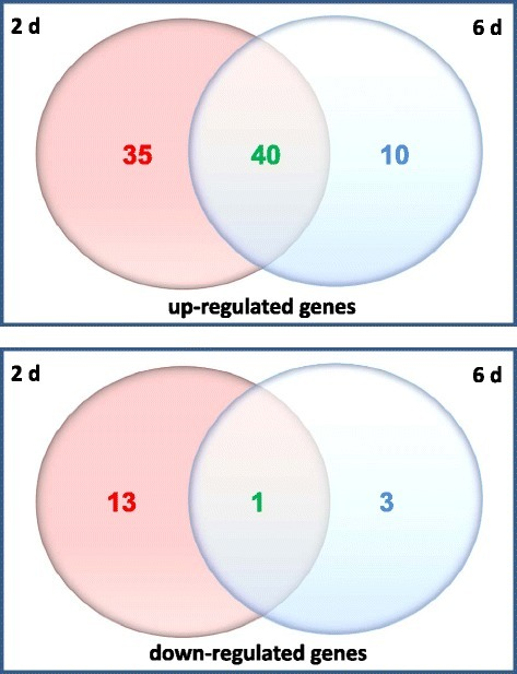 Venn datagram of the number of genes which are up- or down-regulated in Arabidopsis roots exposed toP. indicafor either two or six days. Numbers of genes regulated only after 2 d of interaction are shown in red colour; those regulated only after 6 d are shown in blue; number of genes regulated at both time points are shown in green. The results are based on 3 independent biological experiments.