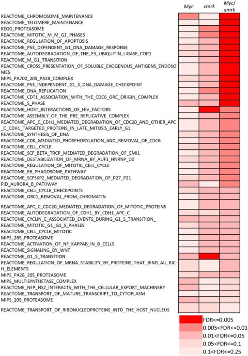 Synergetic effects of pathways co-regulated by Myc and xmrk.44 canonical pathways were identified to be up-regulated in both Myc- and xmrk-induced zebrafish liver cancer. 32 out of them showed more significant up-regulation in the Myc/xmrk transgenic liver cancer. FDR values are shown in different color gradient as indicated.