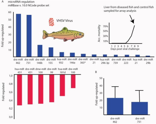 miR-462 and miR-731 are highly upregulated in the liver of VHSV-infected rainbow trout.(A) Microarray analysis of miRNA regulation in liver samples from diseased rainbow trout infected with Viral hemorrhagic septicaemia virus (VHSV). The Ncode V2 probe set covering miRBase v.9 was used to detect up-(blue) and down-regulated (red) miRNAs. The miRNA probes are denoted according to the miRBase nomenclature. Organisms: dre = Danio rerio, hsa = Homo sapiens and dme = Drosophila melanogaster. (B) qPCR validation of miR-462 and miR-731 expression in the liver of VHSV-infected rainbow trout. Fold regulation was calculated from the mean values of duplicate measurements using the ΔΔCt method, using the omy-snoRNA U23 for normalization. miRNA expression was analyzed in 6 VHSV-infected fish relative to 6 uninfected fish.