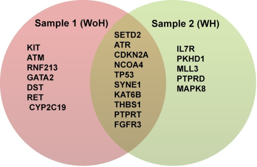 Venn diagram showing cancer driver genes in each sample open i venn diagram showing cancer driver genes in each sample genes in red and green background ccuart Choice Image