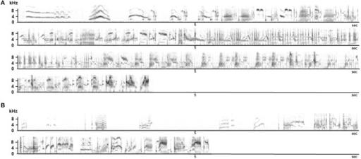 Song sequences produced by an adult (A) and by a 2 year old birds that did not receive adult tutoring (B). Recordings were made at the same time of year.