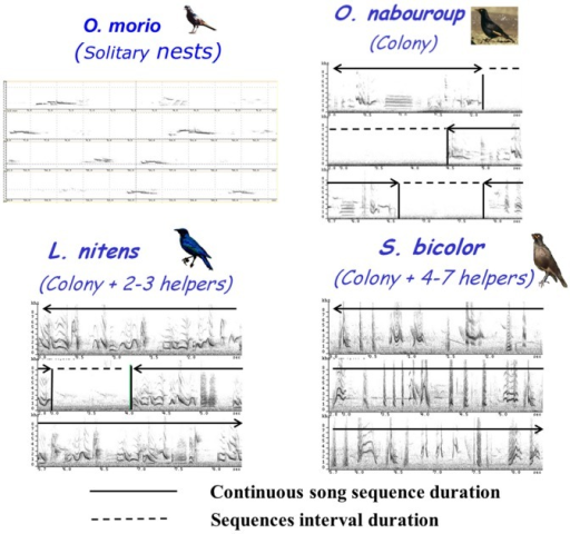 Song sequence duration and sequence interval duration for the 4 species of African sturnids.