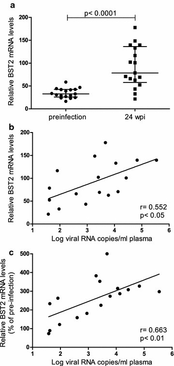 Whole blood BST2 mRNA levels in SIV-infected macaques. BST2 mRNA levels in whole blood of 17 rhesus macaques were determined using PAXgene Blood RNA Kit and real time PCR before and at 24 weeks after infection (wpi). a BST2 mRNA levels were compared between uninfected (circles) and SIVmac251 infected animals (squares). BST2 mRNA levels are shown in copy numbers per 100 copies of GAPDH. Horizontal lines within the clusters are depicting the median. Group comparisons were calculated using two-tailed Mann–Whitney's U test. BST2 mRNA levels at 24 wpi (b) and BST2 mRNA levels after normalization to individual pre-infection values (c) were correlated with plasma viral load. Viral load is displayed as log-transformed RNA copies per millilitre (ml) plasma. r Spearman's correlation coefficient; regression line is shown; p, p value. Each data point represents one individual animal