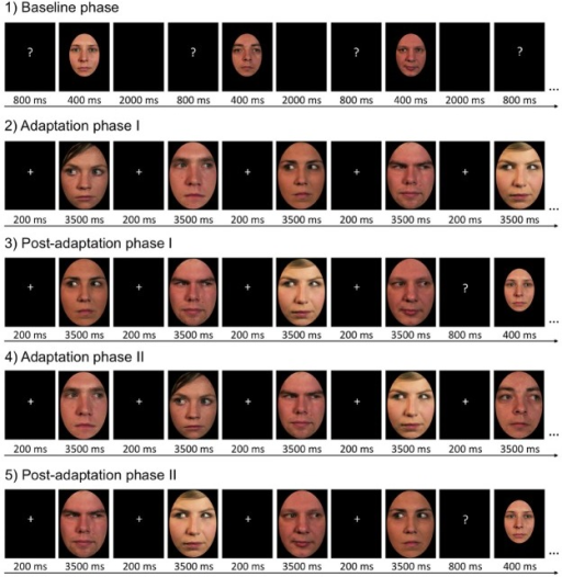 Trial procedure in the five stages of the experiment. This example illustrates trials as seen by participants who adapted to female faces with left gaze and male faces with right gaze. The other half of the participants adapted to male faces with left gaze and female faces with right gaze. Please note that the depicted stimulus identities are different from those shown in the actual experiment.