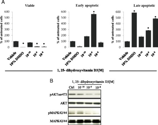 1,25-dihydroxyvitamin D3 induces apoptosis of human ovarian cancer cells in vitro. Panel a The A2780 human ovarian cancer cell line was treated with 1,25-dihydroxyvitamin D3 at concentrations ranging from 10−10–10−8 M for 16 h, and apoptosis was detected using the AnnexinV–FITC apoptosis kit and analyzed using flow cytometry. The data shown here indicate the induction of significant early apoptosis in cells treated with 10−9 M 1,25-dihydroxyvitamin D3 compared with cells treated with vehicle only. In this experiment, 10 % DMSO was used as positive control. The means of two experiments in triplicate were used. For statistical comparisons, a one-way analysis of variance and a Tukey's test for post hoc analysis were carried out, and means ± SD are shown. Significance level: *p ≤ 0.05 versus control (untreated) cells. Panel b In parallel, treatment of the A2780 human ovarian cancer cell line with 1,25-dihydroxyvitamin D3 led to inhibition of phosphorylation of the p42/44 MAPK and AKTser473 intracellular pathway proteins in dose-dependent responses. Human ovarian cancer cells (2 × 106 cells/mL) were incubated for 12 h in RPMI with 0.5 % BSA culture medium containing either 1,25-dihydroxyvitamin D3 at various concentrations (10−10–10−8 M) or vehicle only. The experiment was carried out twice with similar results, and representative blots are shown