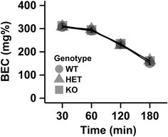 Metabolism of an acute injection of ethanol (3 g/kg) is not influence by the Chrnb4 gene. Data (mean ± SEM) represent blood ethanol concentrations (BEC). Female WT = 9, HET = 8, KO = 10; Male WT = 8, HET = 6, KO = 8