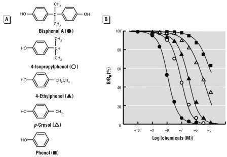 Chemical structure of BPA and a series of alkyl phenols and their dose–response curves in the radioligand receptor binding assay for ERR-γ . (A) Chemical structure of BPA and its derivatives with the alkyl group at the para position: 4-isopropylphenol (a 4-isopropyl group); 4-ethylphenol (an ethyl group); p-cresol (a methyl group); and phenol (a hydrogen atom). (B) Binding activities of BPA, 4-isopropylphenol, 4-ethylphenol, p-cresol, and phenol examined by the competitive binding assay using [3H]BPA and GST-ERR-γ –LBD; representative curves indicate the IC50 value closest to the mean IC50 from at least five independent assays for each compound.