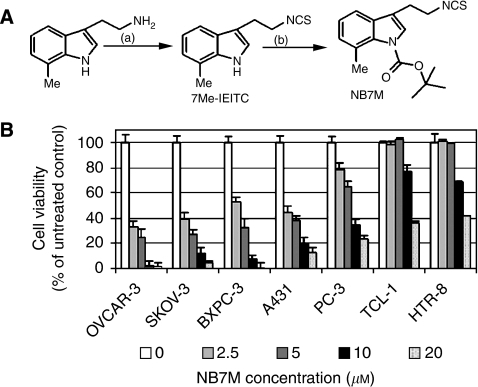 Design concept and cytotoxicity of indolyl ethyl isothiocyanate NB7M. (A) Synthesis and structure of 7Me-IEITC derivative NB7M. (see Materials and Methods; Supplementary Information). (B) Comparative analysis of the cytotoxic effect of NB7M in various human cancer and control cell lines. SKOV-3, OVCAR-3 (ovarian epithelial adenocarcinomas), PC-3 (prostate adenocarcinoma), BxPC-3 (pancreatic adenocarcinoma), A-431 (epidermoid carcinoma), HeLa (endometrial), TCL-1 (trophoblasts) and HTR-8 (first-trimester cytotrophoblasts) human cell lines were treated with various concentrations (0–20 μM) of NB7M for 48 h. The MTS viability assay was carried out as described (Materials and Methods). Experiments were performed in triplicates; data are expressed as the mean of the triplicate determinations (X±s.d.) of a representative experiment in % cell viability of samples with untreated cells (100%).