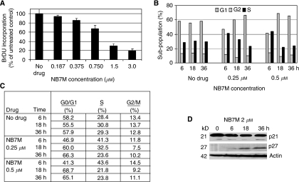 Effect of NB7M on proliferation and cell-cycle progression of SKOV-3 cells. (A) Cell Proliferation/BrdU incorporation. SKOV-3 cells were treated with NB7M (0, 0.187, 0.375, 0.75, 1.5, 3 μM) for 48 h. The proliferation assay was carried out as described (Materials and Methods). Experiments were performed in triplicates; data are expressed as the mean of the triplicate determinations (X±s.d.) in % cell proliferation of untreated cells. (B and C) Cell-cycle analysis by FACS. SKOV-3 cells were treated with various NB7M (250 or 500 nM) for 6, 18 or 36 h. Cell-cycle analysis of treated and untreated cells was carried out as described (Materials and Methods). Data are presented as the relative fluorescence intensity of cell subpopulations in a bar chart (B) or table (C). (D) Expression of cyclin-dependent kinase inhibitors in NB7M-treated SKOV-3 cells. Expression of p21 and p27 inhibitors in NB7M and vehicle-treated SKOV-3 cells were analysed by western blotting of lysates and probed with the appropriate primary and secondary antibodies.