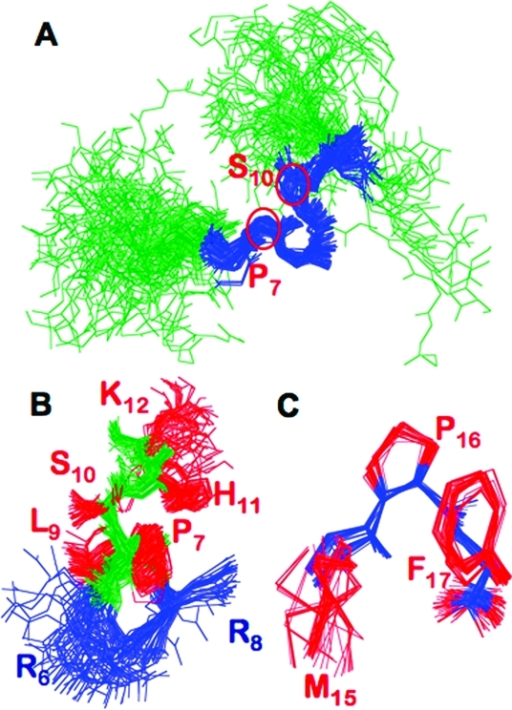 Structure of apelin-17 bound to an SDS micelle: (A) superposition of all 80 members of the final ensemble of structures from R6 to K12 (R6−K12 colored blue, remainder green) with P7 and S10, initiation points of type I and type IV β-turns, respectively, indicated; (B) zoom of the superposition in (A) (backbone atoms green) showing cationic side chains of R6 and R8 (blue; all other side chains red) falling on the same face of apelin-17; (C) superposition of all heavy atoms of M15−F17 for all 80 ensemble members, with the backbone shown in blue and side chains colored red.