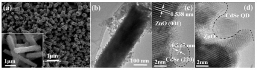 Structural characterization of ZnO NRAs grown in-situ in CdSe QD solution. (a) SEM image (inset: higher magnification SEM of several nanorods detached from the Zn substrate); (b) TEM image of a ZnO nanorod from sample in (a); (c, d) HRTEM images of a ZnO nanorod surface with incorporated CdSe QDs.