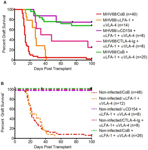 Comparative Effect of CTLA-4-Ig and anti-CD154+ adhesion blockade in MHV68-infected and non-infected mice.A) Kaplan-Meier survival curves comparing skin graft survival between the following groups of MHV68-infected mice: MHV68-infected mice treated with CoB (solid red line, MST 13.5 d, n = 40, 7 independent experiments); MHV68-infected mice treated with anti-LFA-1+ anti-VLA-4 (solid orange line, MST 27 d, n = 14, 2 independent experiments); MHV68-infected mice treated with anti-CD154+ anti-LFA-1/anti-VLA-4 (solid violet line, MST>100 d, n = 8, one experiment); MHV68-infected mice treated with CTLA-4-Ig+anti-LFA-1/anti-VLA-4 (solid magenta line, MST 41 d, n = 8, one experiment); MHV68-infected mice treated with CoB+anti-LFA-1/anti-VLA-4 (solid green line, MST>100 d, n = 25, 3 independent experiments). Skin graft survival between groups was compared using the log-rank test. In infected animals, the combination of anti-LFA-1 and anti-VLA-4 was compared to CoB alone resulting in p = .0023. CTLA-4-Ig+anti-LFA-1/anti-VLA-4 compared to CoB alone yielded p = .0002. The combination of anti-CD154+ anti-LFA-1/anti-VLA-4 was significantly different from CoB alone (p<.0001) and not significantly different from dual CoB (anti-CD154+ CTLA-4-Ig)+dual adhesion blockade (p = .73). B) Kaplan-Meier survival curves comparing skin graft survival between the following groups of non-infected mice: non-infected mice treated with CoB (dotted red line, MST 22 d, n = 48, 8 independent experiments); non-infected mice treated with anti-LFA-1+ anti-VLA-4 (dotted orange line, MST 24, n = 12, 2 independent experiments); non-infected mice treated with anti-CD154+ anti-LFA-1/anti-VLA-4 (dotted violet line, MST>100 d, n = 8, one experiment); non-infected mice treated with CTLA-4-Ig+anti-LFA-1/anti-VLA-4 (dotted magenta line, MST>100 d, n = 8, one experiment); non-infected mice treated with CoB+anti-LFA-1/anti-VLA-4 (dotted green line, MST>100 d, n = 26, 3 independent experiments). Graft survival between groups in non-infected animals was compared with the log-rank method. Survival in the CoB only and anti-LFA-1+ anti-VLA-4 groups was not significantly different (p = .87). Relative to CoB alone, survival was significantly prolonged in non-infected animals treated with anti-CD154+ anti-LFA-1/anti-VLA-4 (p<.0001), CTLA-4-Ig+anti-LFA-1/anti-VLA-4 (p<.0001), or dual CoB (anti-CD154+ CTLA-4-Ig)+anti-LFA-1/anti-VLA-4 (p<.0001).