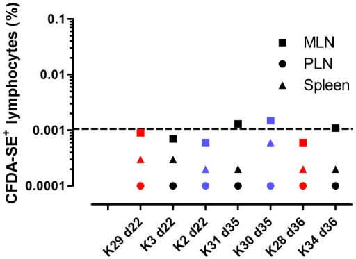 Detection of adoptively transferred allogeneic lymphocytes in lymphoid tissues of recipient animals at days 22, 35 and 36 post-transfer.Dashed line indicates threshold for detection of CFDA-SE+ cells. Animals are colour-coded by experimental group: black MHC-identical siblings; red MHC-identical unrelated; blue MHC-mismatched.