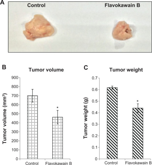 Tumor size and weight harvested from the control and flavokawain b-treated mice.Notes: (A) Picture of the tumors harvested from the control and flavokawain B (50 mg/kg)-treated mice. (B) Volume of the tumors was measured using a vernier caliper. (C) Weight of the tumors was measured after being harvested from the mice after 28 days of treatment. Each value represents the mean ± standard deviation for triplicates (*P<0.05); n=7 mice per group.