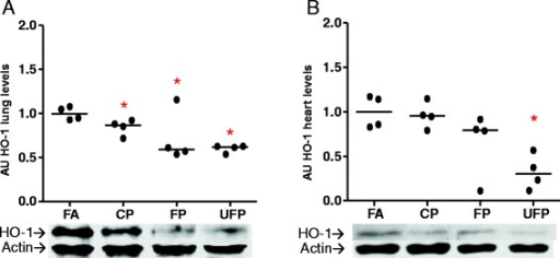 Particle size-dependent decreases in heme oxygenase-1 after subchronic exposure in the lungs and heart. Animals were exposed subchronic to coarse (CP), fine (FP) and ultrafine particulate (UFP) or to filtered air as a control (FA) for 8 weeks (5 h/day, 4 days/week). Protein levels of heme oxygenase-1 (HO-1) in arbitrary units (AU) in lungs a) and heart b). Scatter dot plot shows the value of the median. * indicates significant differences among groups (n = 4 per group, p < 0.05)