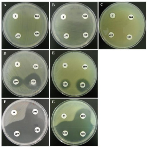 Growth of strains O. tritici SCII24 (A), Acr3_1 mutant (B), Acr3_2 mutant (C), arsB mutant (D), arsB/Acr3_2 mutant (E), arsB/Acr3_1 mutant (F) and arsB/Acr_1/Acr_2 mutant (G) on LB medium containing filter discs saturated with diverse arsenite concentrations, after 2 days of incubation at 35°C.Numbers inside filters indicate the corresponding metal concentration used in each filter (0 mM, 100 mM, 250 mM and 500 mM As(III)).