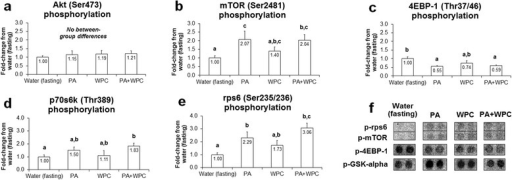 Effects of PA with or without the co-ingestion of WPC on mTOR signaling markers. Legend: Data are presented as means ± standard error, and bars not sharing similar superscript letters are significantly different (p < 0.05) as determined by one-way ANOVAs with protected LSD post hoc comparisons. CON n-size = 13, PA, WPC, and PA + WPC n-sizes = 7–8. Panels a–e: Effects of each ingredient on upstream positive modulators of protein synthesis. Panel f: representative digital images select phospho-targets that were altered with feedings