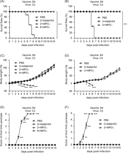 Vaccine treatments protect Tg mice against a lethal-dose challenge of subgenotypes of the EV71 virus.The survival rate of immunized Tg mice challenged with 3×106 pfu of the C2 strain (A) or 1×106 pfu of the C4 strain (B). Mouse body weight change after EV71 C2 (C) or C4 (D) virus challenges. Scores of central nervous system (CNS)-like hind limb paralysis caused by EV71 C2 (E) or C4 (F) viral challenges. The severity of CNS symptoms was scored from 0 to 5 using the following criteria for scoring CNS diseases: 5 = severe front and rear limb paralysis (LP) and no movement, 4 = moderate two rear LP and hesitant movement, 3 = one rear LP with bending legs, 2 = mild rear limb bended, 1 = slightly rear limb bended, and 0 = normal movement. LP is defined as the rigidness of mouse legs that are resist movement. The PBS and vaccination groups are indicated as symbols. *: p < 0.05, **:p < 0.01, and ***: p < 0.001.