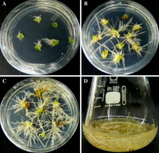 steroidal lactones from withania somnifera