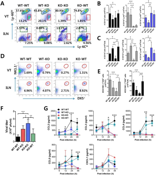IFN-I signaling on infiltrated leukocytes derived from HSC lineage is required for normal recruitment of CD11b+Ly-6Chi monocytes, but not NK cells.BM cells from BL/6 (WT) or IFNAR KO (KO) were grafted into lethally irradiated BL/6 or IFNAR KO recipient mice, which were infected i.vag. with HSV-1. (A) Leukocyte infiltration in vaginal tract and iliac LN of infected recipients. (B,C) Accumulated number of infiltrated leukocyte subsets. Cells were prepared from vaginal tract (B; VT) and iliac LN (C; ILN) by collagenase digestion at 24 h pi and subcellular proportions of CD11b+Ly-6Chi and CD11b+Ly-6Ghi leukocytes were determined using flow cytometric analysis. (D,E) Frequency and absolute number of infiltrated NK cells in VT and ILN of the recipients. Cells prepared from VT and ILN of the recipients were used to analyze the frequency (D) and total number (E) of CD3−NK1.1+DX5+ NK cells at 48 h pi. (F) Viral titers in vaginal lavages. Viral titers in vaginal lavages collected at 48 h pi were determined by plaque assay. (G) Chemokine secretion in vaginal lavages of the recipients. The levels of chemokine proteins were determined by CBA using vaginal lavages at 6, 12, 24, and 48 h pi. Values in dot-plots represent the average percentages of each population derived from four independent samples, and data in graphs represent the average ± SD of values derived from three individual experiments (n = 4–5). *, p<0.05; **, p<0.01; ***, p<0.001 compared with the level of the indicated group.