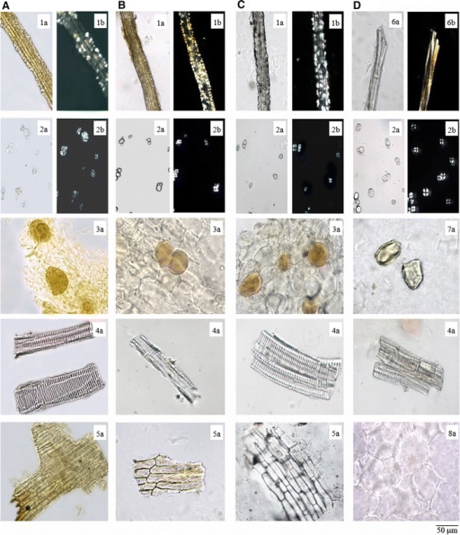 Micrographs show powders of ATR and its adulterants. AATR Acori Tatarinowii Rhizoma; BAGR Acori Graminei Rhizoma; CACR Acori Calami Rhizoma; DAAR Anemones Altaicae Rhizoma. Notations are: 1 crystal fibers; 2 starch granules; 3 secretory cells; 4 vessels; 5 epidermal cells of leaf sheath; 6 fibers; 7 stone cell; 8 parenchymatous cell. a Indicated features under the light microscope; b Indicate features under the polarized microscope