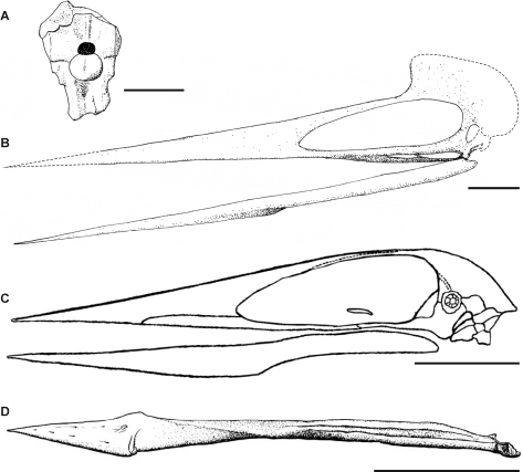 Hatzegopteryx thambema v Quetzalcoatlus northropi