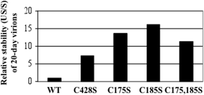 "Relative stabilities of 20-day wild-type versus mutant virions.20-day wild-type (WT), C428S, C175S, C185S, and C175,185S viruses were Optiprep-fractionated. Fractions were assayed by a SYBR green-based DNA encapsidation assay to detect total endonuclease-resistant genomes per fraction. As a measure of capsid stability, the sum of genomes in the uppermost gradient fractions (fractions #1 through #4) was described as ""unstable"" (US), which were genomes either not associated or disassociated from an intact capsid during ultracentrifugation. The sum of genomes flanking highly infectious fractions (fractions #6 through #9) was described as ""stable"" (S) since they were associated with intact capsids. Relative capsid stability is described by the ratio US/S, whereby higher values indicate more unstable virions [23]."