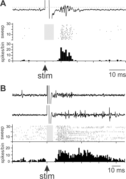 Stimulation of MMAN functionally excites the ipsilateral HVC.A. Example of the short latency response from MMAN stimulation to HVC response. Top trace is an exemplar of the raw HVC response to MMAN stimulation (large artifact). The dotted grey line denotes the spike threshold set by the user. Middle trace, raster plot of responses to thirty stimulus pulses in MMAN. Grey bar indicates time in which stimulus artifacts were removed from the plot. Bottom trace, PSTH of HVC response to MMAN stimulation. B. Longer latency response in HVC to MMAN stimulation. Top two traces, raw exemples of two HVC responses to stimulation of MMAN. Middle trace, raster plot to of HVC response to 30 MMAN stimulations. Grey bar indicates time in which stimulus artifacts were removed from the plot. Bottom trace, PSTH of the cumulative response in HVC to MMAN stimulation. For both A and B, bin size = 1 ms. A and B are from two different birds.