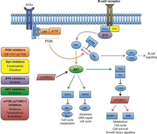 Targeting The Pi3k And Btk Pathways In Nhl The B Cell