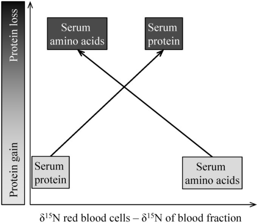 Projected differences in isotopic ratios of N (δ15N in ‰) between red blood cells and serum fractions in relation to gain or loss of body protein; the gradient of shading indicates the light (low δ15N) to heavy N (high δ15N).