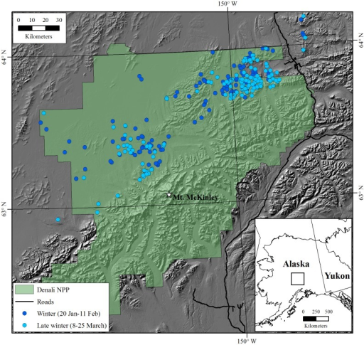 Winter and late winter locations of adult female caribou in Denali National Park and Preserve (Denali NPP), Alaska; blood was collected (n = 168) for isotopic analyses at late winter locations during March 1993–2007.