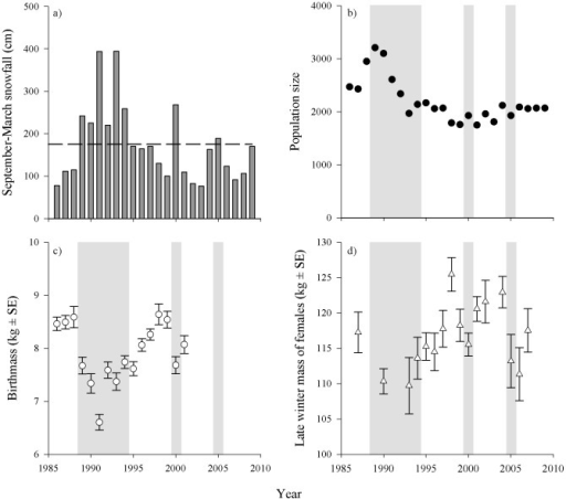 The a) snowfall (22-year mean depicted by dashed line), b) size of the Denali Caribou Herd, 1986–2009 [40], c) birth masses of neonates [7], and d) body masses of adult females (≥3 y) in late winter (L. Adams, USGS, unpublished data).Shading denotes winters with above average snowfall.