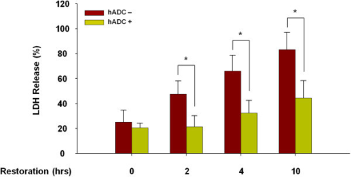 Neuroprotective effect of human arginine decarboxylase (hADC) transduction against oxygen-glucose deprivation (OGD) and restoration injury. Astrocytes restored to normoxic glucose-supplied conditions after 4 hrs OGD. Cytotoxicity was assessed by the lactate dehydrogenase (LDH) assay. Data are expressed as mean of ± SD of the three different experiments performed from separate cell preparations, with triplicate determinations performed in each experiment. Asterisks indicate a p < 0.001.