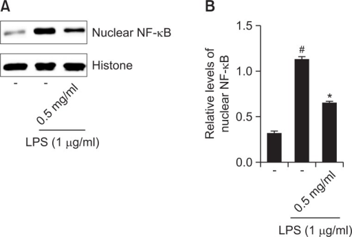 Effect of R. fasciculatum on the NF-κB activation in the nuclei of LPS-stimulated Raw 264.7 cells. Cells were pre-treated with R. fasciculatum (0.5 mg/ml) for 1 h and then stimulated with LPS for 2 h. (A) Nuclear extracts were prepared as described in the Materials and Methods section and evaluated for RelA/p65 via Western blot analysis. (B) The relative levels of NF-κB were represented. Statistical evaluation of the results was performed by independent t-test. All data were represented in the mean ± S.D. of triplicate determinations from triplicate separate experiments (#p<0.05 vs. control, *p<0.05 vs. LPS alone).