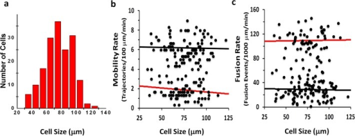 GSV mobility and Fusion rates do not correlate with adipocyte size.Histogram of estimated cell sizes obtained from TIRF projection (a). Mobility and fusion rates as a function of estimated cell sizes (b and c). The slopes of the linear fits for both mobility and fusion in the basal (black) and insulin stimulated (red) are not significantly different from zero indicating there is no correlation with adipocyte size.