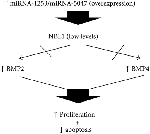 Pathway proposed in which miRNA-1253 and miRNA-5047 can deregulate some functions due to their overexpression and some cellular effects on proliferation and apoptosis in MB.