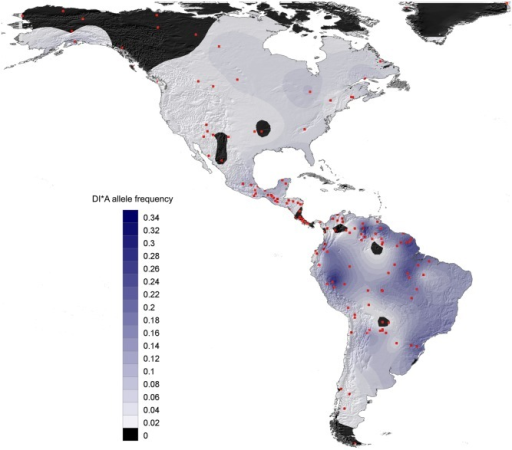 Mapping of DI*A allele frequency amongst 144 North, Central and South Amerindians.