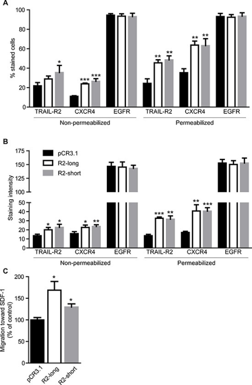 Overexpression of TRAIL-R2 in MDA-MB-231 cells upregulates the expression of CXCR4 and enhances migration towards SDF-1Expression of TRAIL-R2, CXCR4 and EGFR in control cells (pCR3.1) and cells overexpressing the long (R2-long) or short (R2-short) isoforms was assessed by flow cytometry in non-permeabilized and permeabilized cells and percent of stained cells (A) and staining intensities per cell (B), relative to non-specific antibody controls, were quantified. (C) Cells were analyzed in regard to their migration capacity towards SDF-1 in a trans-well assay. Graphs represent average values ± SD. (A–B: n = 3, C: n = 4) (*p < 0.05, **p < 0.01 ***p < 0.001).