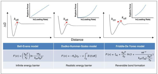 Models used to interpret DFS data. The assumed energy landscape and the resultant theoretical force versus loading rate relationship (insets) are shown above each model where F(v) is the most probable rupture force at a loading rate v, kB is Boltzmann's constant, T is temperature, xβ indicates the location of the energy barrier, and koff is the off rate constant at zero force. In Dudko-Hummer-Szabo model (centre), ks is the harmonic force constant scaled by kBT and S(t) is the rupture probability as a function of the time t. In Friddle-De Yoreo model (right), feq indicates the force at which the dissociation and association are in equilibrium, and koff(feq) is the off rate constant at feq.