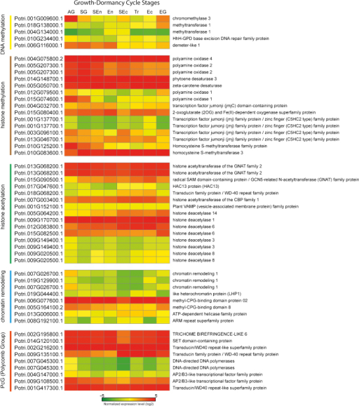 Heat map of 52 genes that are associated with epigenetic regulation during the dormancy cycle. To show their normalized expression levels according to eight different growth-dormancy cycle stages, we used our unpublished RNA-Seq data to create a heat map for the genes involved in DNA methylation, histone modification, chromatin remodeling and polycomb group (PcG). The gene expression values were normalized by RPKM method. Red and green in the heat map mean upregulated and downregulated genes, respectively. Growth-dormancy cycle stages are active growth (AG), stop growth (SG), start of endodormancy (SEn), endodormancy (En), start of ecodormancy (SEc), transition of ecodormancy (Tr), ecodormancy (Ec) and growth resumption (EG).