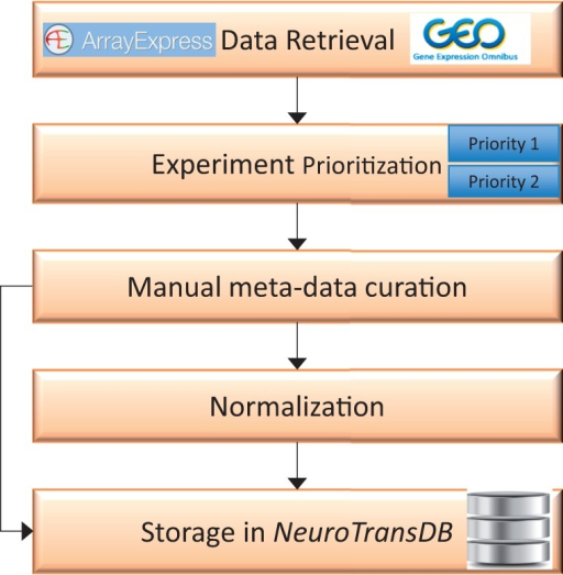Overall workflow for curation of gene expression studies related to neurodegeneration from public archives. The first step involves automated retrieval of gene expression studies (along with metadata) from public archives such as GEO, and ArrayExpress. The related studies were further assigned to one of the two prioritization classes (priority 1 or priority 2), based on the specific experimental variables. Next, manual curation was applied to capture missing metadata information on priority 1 studies. All the harvested metadata was normalized using standard vocabularies. Both raw and normalized data are stored in NeuroTransDB.