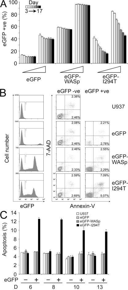 eGFP-WASpI294T expression retards proliferation and induces apoptosis. (A) U937 cells transduced with eGFP (MOI of 0.2 and 1), eGFP-WASp (MOI of 1 and 5), or eGFP-WASpI294T (MOI of 1 and 5) were analyzed for eGFP expression by flow cytometry 3, 6, 8, 10, 13, 15, and 17 d after transduction (each bar represents the mean ± SD value of the percentage of eGFP+ cells in the culture for independent triplicates from each day). (B) Apoptosis assessed by flow cytometry (annexin V and 7AAD staining) 8 d after transduction at the lower MOIs shown in A. (C) Apoptosis (annexin V+) quantified in triplicate samples 6, 8, 10, and 13 d after transduction at the lower MOIs shown in A. *, P < 0.005 compared with untransduced U937 cells in the same culture. eGFP was transduced at a lower MOI than other constructs, as eGFP expression was 5–10-fold higher than all other eGFP fusion proteins.