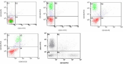 Endothelial cell markers expression on primary SVF cell population. The cells represented in the CD146 vs UEA-1 plot are CD45-.