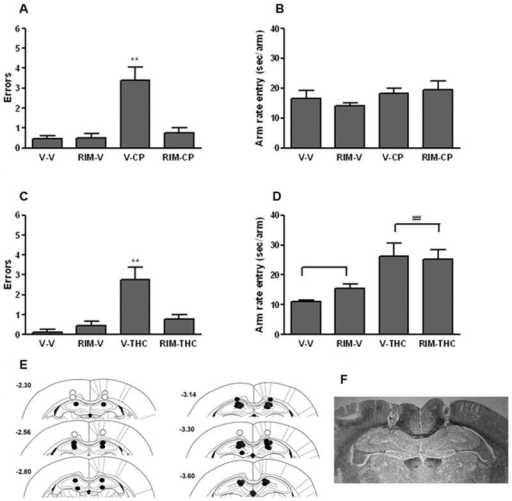 Hippocampal CB1 receptors mediate the memory disruptive effects of systemically administered cannabinoid receptor agonists in the radial arm maze task. A. Intracerebral administration of rimonabant (Rim; 0.06 μg/rat) into the dorsal hippocampal blocked re-entry errors caused by the potent cannabinoid CP-55,940 (CP; 0.05 mg/kg; i.p.). B. CP-55,940 and rimonabant given separately or in combination did not affect maze running speed. C. Intracerebral administration of rimonabant (0.06 μg/rat) into the dorsal hippocampal blocked re-entry errors caused by Δ9-THC (THC; 5.6 mg/kg; i.p.). D. Δ9-THC led to a significant decrease in the rate of entry into each arm, which was not affected by rimonabant. E. Location of intracerebral infusion sites. Closed and open circles respectively reflect injections sites properly placed within the hippocampus and outside the hippocampus. E. Photomicrograph of cannulae placement in dorsal hippocampus from a representative rat. ** p < 0.01 versus each other group. ## p < 0.01 for Δ9-THC vs. vehicle treatment. Results are shown as mean ± SE. n=7-17 rats/group.