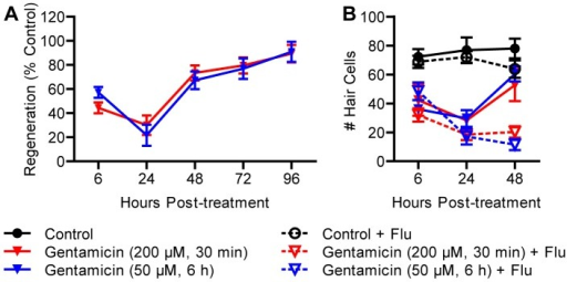 Proliferation is required for regeneration after treatment with gentamycin.(A) Wild type larvae were treated at 5 dpf with 200 μM gentamicin for 30 min (acute) or 50 μM gentamycin for 6 h (chronic) and allowed to recover for 96 h from the beginning of treatment. Gentamicin-induced hair cell death was delayed compared to neomycin. There was no dose-dependent effect on regeneration, which was complete by 96 hpt. (B) When fish were incubated in flubendazole during recovery, minimal regeneration was observed, suggesting that proliferation was required. N = 8 fish per group. Error bars are +/− SD.