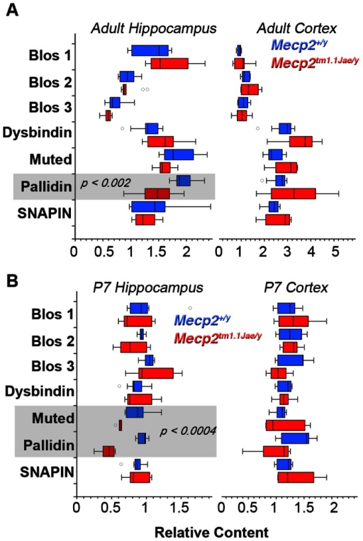 Quantitative Real Time PCR Determination of BLOC-1 Subunit Transcripts.BLOC-1 subunit transcripts from symptomatic adult (A) and P7 (B) mice hippocampi and cortices were analyzed by qRT-PCR. Box plot depicts relative mRNA content for wild type (Mecp2+/y, Blue) and Mecp2 mutant tissue (Mecp2tm1.1Jae/y, Red). P values were obtained by Mann-Whitney U test. Number of animals tested is presented in Table 1.