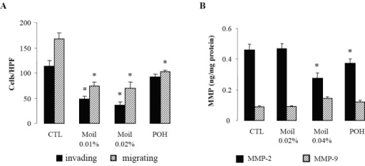 Mastic oil effects on tumor cell invasion/migration and MMP expression. (A) Mastic oil attenuates tumor cell invasion and migration. Serum starved LLC cells were treated with Moil (0.01–0.02% v/v), POH (0.5mM) or vehicle (CTL) for 2 h and then loaded onto BD Matrigel Invasion or Control chambers. The lower chambers were filled with complete medium containing test agents and plates were incubated for 20 h. Migrating cells were counted (200 X magnification, 10 HPF/membrane) and results are expressed as mean ± SEM; n = 9, *P < 0.05 from vehicle. (B) Mastic oil effects on MMP-2 and MMP-9 expression. Serum starved LLC cultures were treated with Moil (0.02–0.04 % v/v), POH (1 mM) or vehicle (CTL) for 48 h and supernatants were analyzed for MMP-2 and MMP-9 levels by ELISA. Results were normalized to total protein and are expressed as mean ± SEM; n = 12, *P < 0.05 from vehicle.